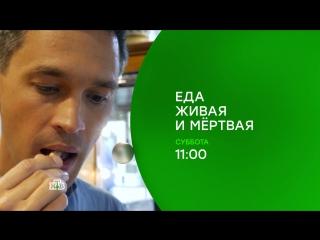 В субботу на НТВ: бананы - вкусные и на экспорт, горчица - русская и сладкая, 5 технических помощников для кухни