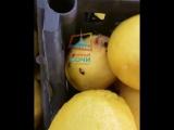 В ГМ Магнит в Адлере тараканы бродят в отделе фруктов и овощей. 30.01.18