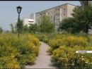 Нашествие сорняков: город Назарово зарос травой по пояс