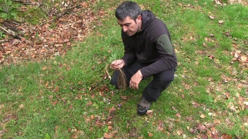 Essbare Pflanzen im Frühjahr - Prepper Survival outdoor Krisenvorsorge.mp4