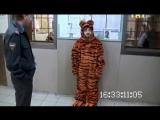 Бородач: тигр-попрыгун