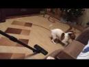 Очень злая собака 🐶 😡))))