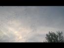 радостный полет птиц над городом...