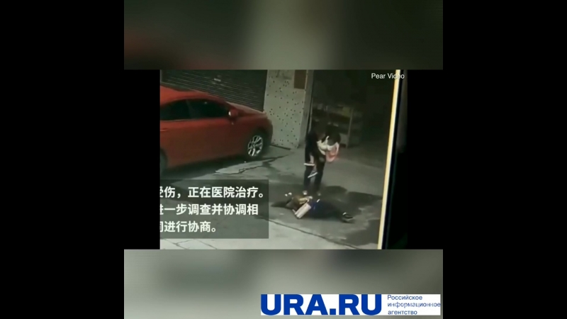 Собака упала с неба
