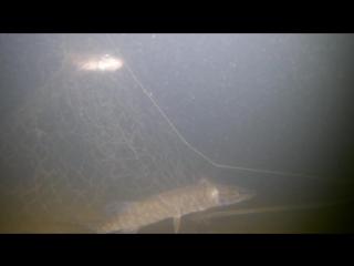 ЖЕСТЬ НА РЫБАЛКЕ! Настоящий рыбак так не сделает! Подводная съемка.mp4