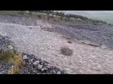 Шторм в Новой Зеландии вызвал странное природное явление, а именно бушующую реку из скал