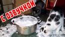 Приколы с котами и смешная озвучка животных – Ха-ха