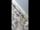 Август Верховный - Live