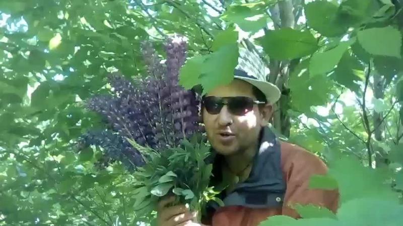 Нарвал букет цветов для любимой М Обзор Столицы Собираю палатку в прямом эфире Вязники смотреть онлайн без регистрации