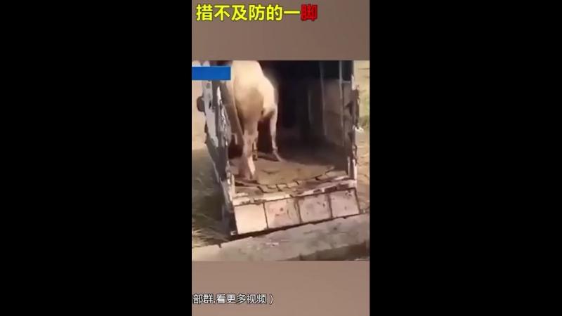 Видео с агрессивными лошадьми