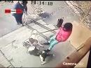 Бульдоги напали на девочку с биглем