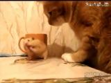Веслое видео про хомяка