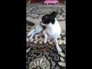 собака лубимая моя