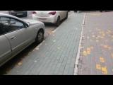 Покрашенные газоны и железные деревья в самом центре Ростова-на-Дону
