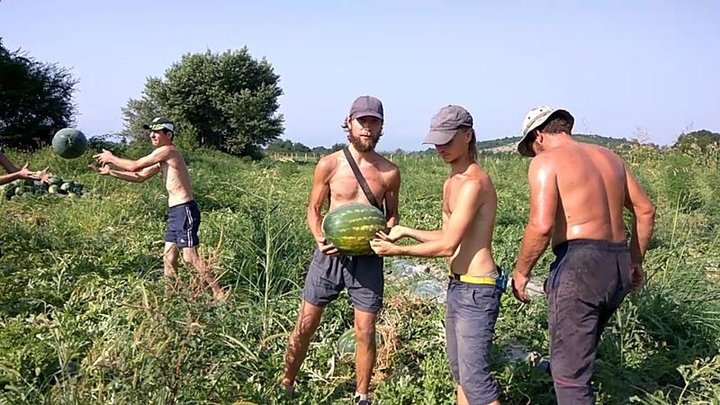 Арбузный спорт на бахче волонтёрство для сыроедов Грузия