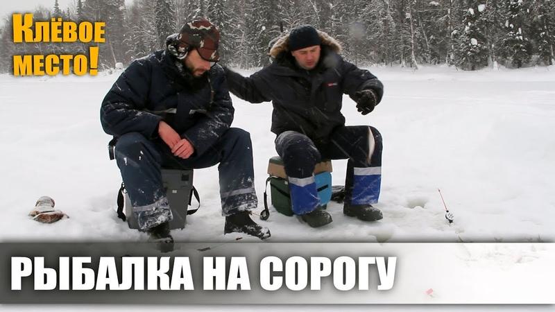 По следам братьев Приходько. Рыбалка на сорогу на озере. Вуктыльский район.