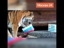 Тигрица Юнона