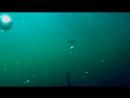 Щука и Окунь на Живца Подводная съёмка