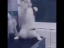 Супер танец кота смотреть всем