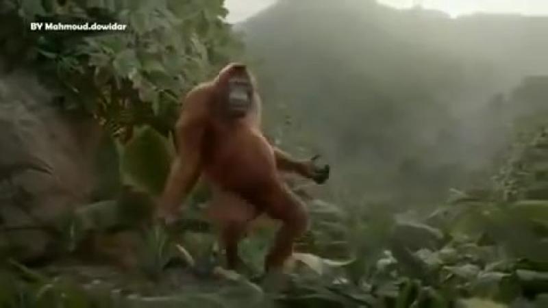 [v-s.mobi]Танец обезьян fun приколы про обезьян.mp4