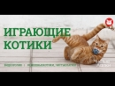 Смешные котики. Часть 14. Видеоподборка от канала The Pet Collective.