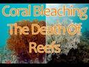 Интервью • Обесцвечивание кораллов