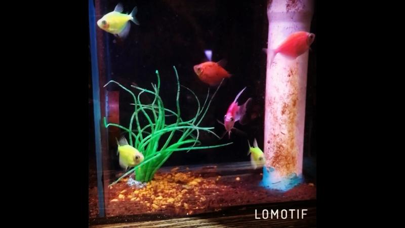 Наши волшебные рыбки! 🐠😻