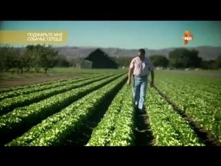 Какие ГМО продукты унесут миллионы жизней в 2018-2020 гг.Пищевые добавки.Усилители вкуса