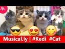 Musically 🐱🧡 Kedilerin En Şirin Halleri Trend Videolar