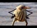Как пользоваться ротаторами Как поставить свою рефссылку под видео