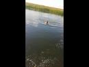 Папа купается в Сычевке