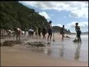 Пляж с горячей водой в Новой Зеландии