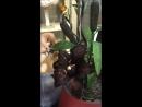 База, букет с чёрной лилией