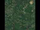 Как на гугл картах выглядят вырубки сибирского леса.