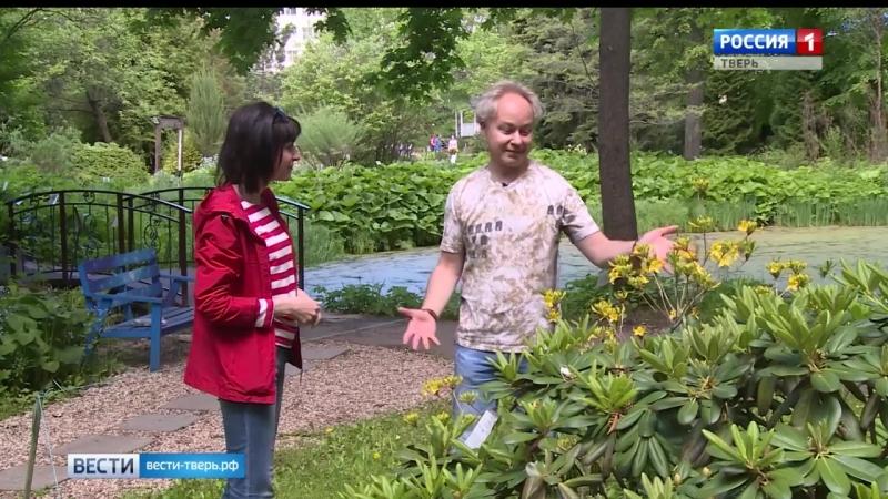 В Ботаническом саду распустились рододендроны
