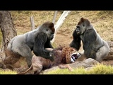 LIVE Wild Discovery Animals - Most Amazing Moments Of Wild Animal Fights - Animals Documentary 2018