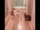 Котя ,сядь правильно.У нас гости