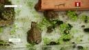 Эколагі Брэста выратоўваюць рэдкіх амфібій чаротных жаб КРАIНА