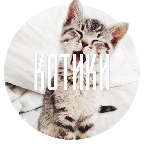 vk.com/kotikiby