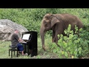 Piano Music for 80 Year Old Elephant