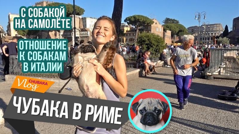 С собакой на самолёте / Отношение к собакам в Италии / Чубака в Риме