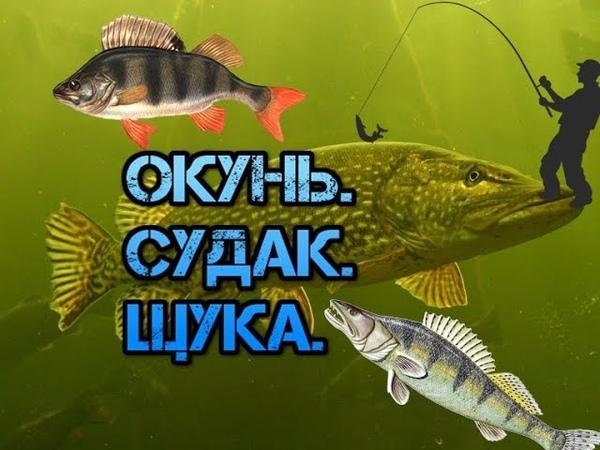 Супер рыбалка на окуня и щуку. Super fishing for perch and pike. Астрахань.