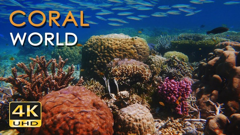 4K Coral World - Tropical Reef Fish - Relaxing Underwater Nature Video Sounds - No Loop - Ultra HD