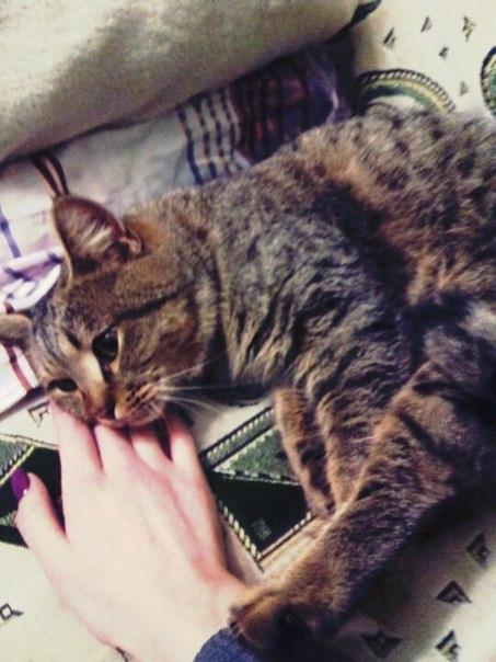 Пропал кот в советском районе, мальчик, тигрового окраса, вечером выпа