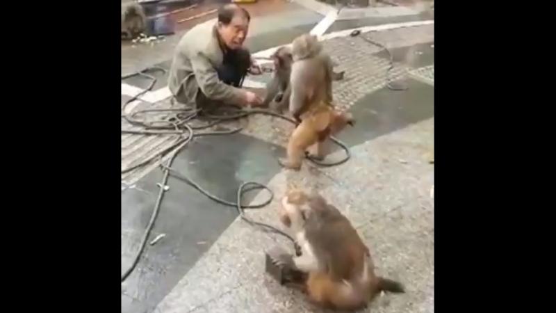 Мужик и обезьяны дерутся прикол смех ржач 😅😹😂🤣