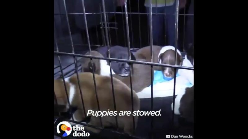 Эти люди тратят тысячи долларов(своих)для того,чтобы перевозить животных,которых занесли в лист усыпления из-за долгого ожидания