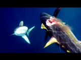 Мужчина дерётся с акулой за пойманного им тунца