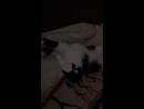 кошечка спит очень смешно ебать до слез🤣🤣
