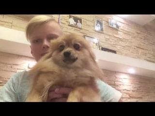 До и после прямой линии: мальчик из Находки улучшил экологическую ситуацию в городе и получил в подарок собаку