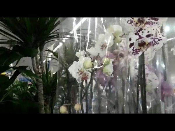 Обзор орхидей и других цветов.Касторама.г.Электросталь.